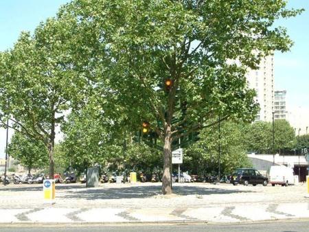 Дерево-светофор. Изображение № 3.