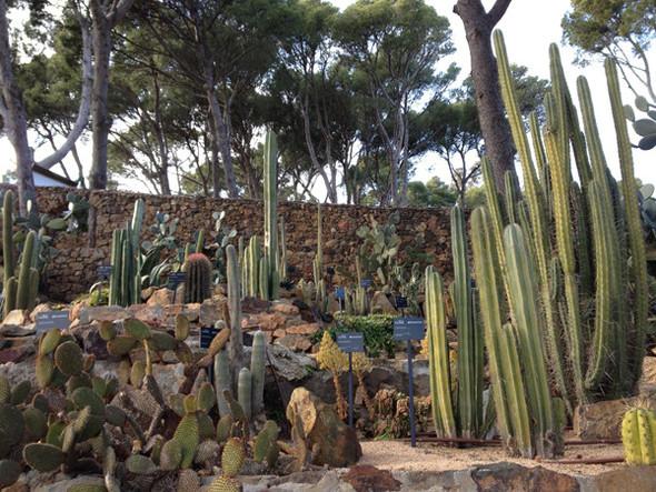 Ботанический сад. Изображение №58.