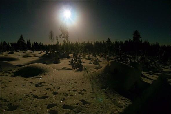 Изображение 3. Выходные в шведском лесу.. Изображение № 3.