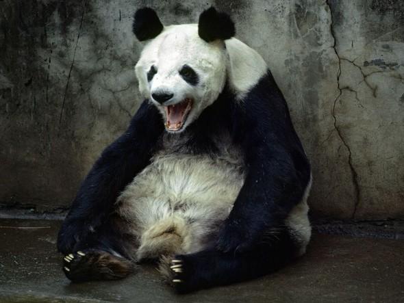 Лучшие снимки от National Geographic (золотой фонд). Изображение № 54.