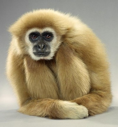 "Jill Greenberg ""Monkey portraits"". Изображение № 13."