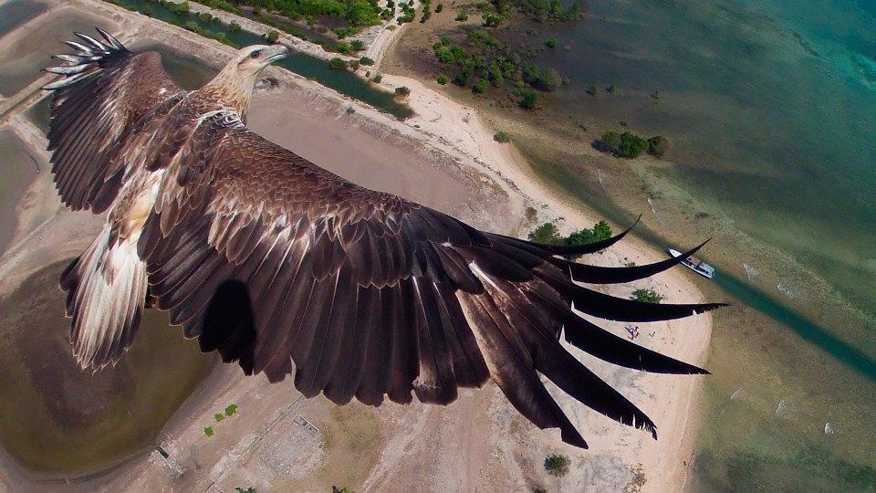 С высоты птичьего полета: Лучшие дрон-фотографии в мире. Изображение № 2.