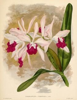 Глянцевые орхидеи: слухи, сплетни, комментарии. Изображение № 3.