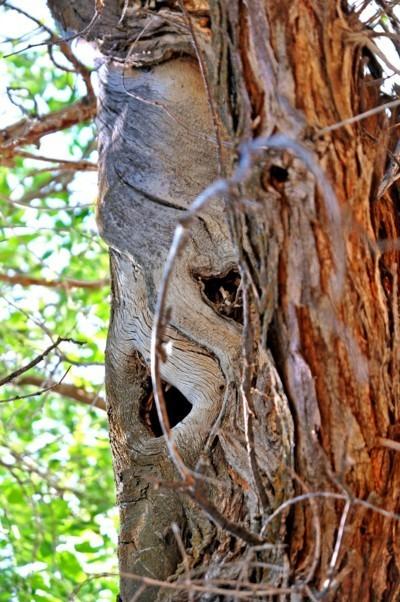 Treefilia. Изображение № 22.