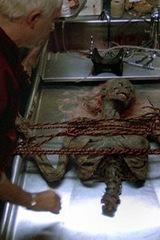 5 Научных причин существования зомби. Изображение № 11.
