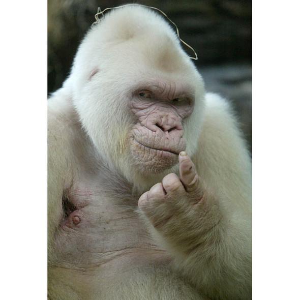 Животные-альбиносы. Изображение № 12.