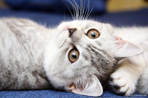 23 фото. Красивейшие кошки. Изображение № 3.