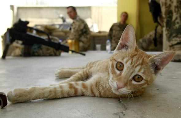 Афганистан. Военная фотография. Изображение № 322.