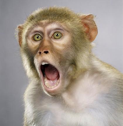 """Jill Greenberg """"Monkey portraits"""". Изображение № 26."""