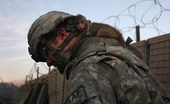 Афганистан. Военная фотография. Изображение № 271.