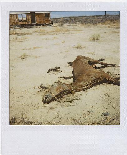 Animals Dead. Изображение № 1.
