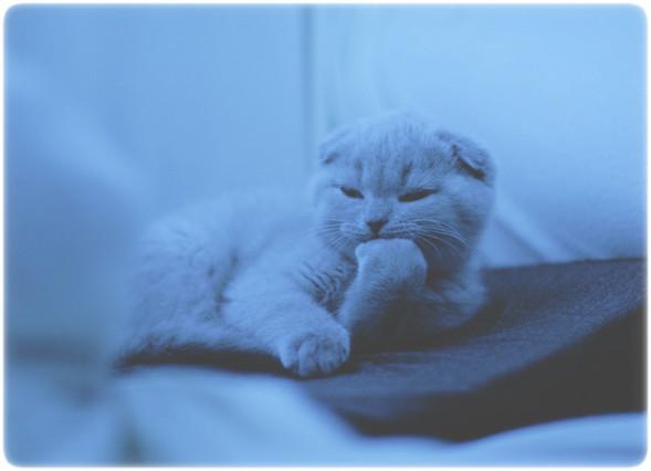 Блудливые коты. Изображение № 13.
