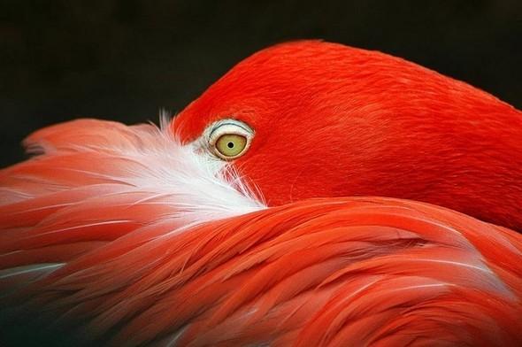Лучшие новые снимки от National Geographic. Изображение № 45.