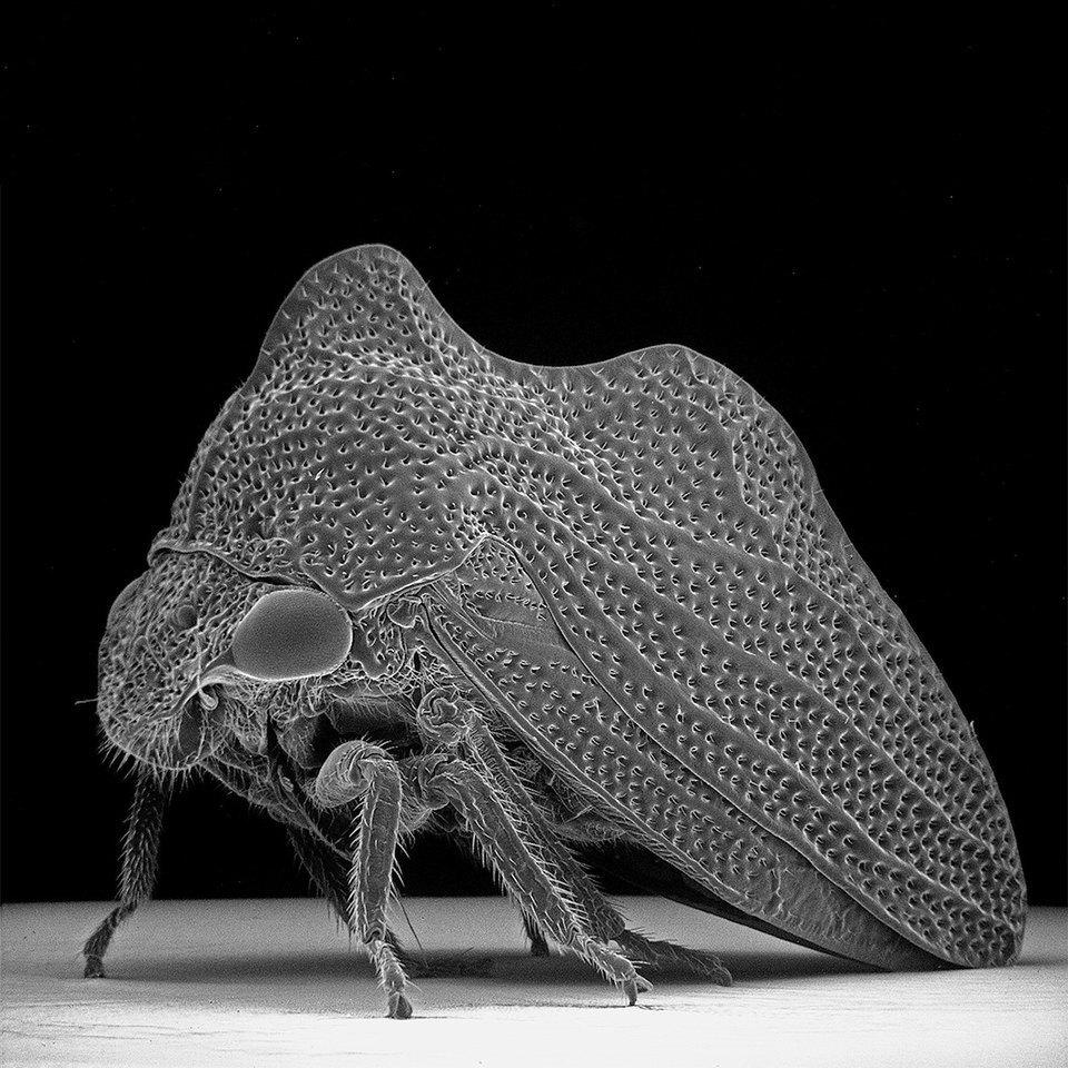 Как насекомые выглядят под микроскопом:  9 высокоточных изображений. Изображение № 2.