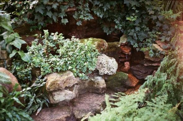 Прогулка по Ботаническому саду. Изображение № 21.