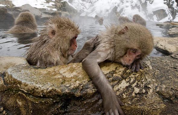 И даже обезьянам нужен отдых. Изображение № 14.