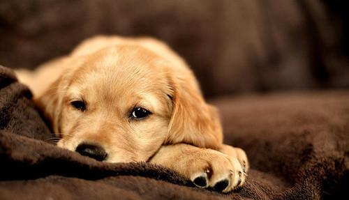 Puppy, puppy, 1-2-3!. Изображение № 2.