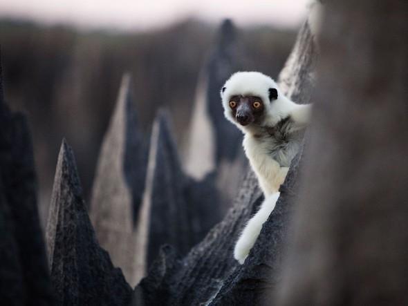 Лучшие снимки от National Geographic (золотой фонд). Изображение № 18.