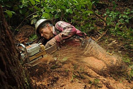 Секвойные истории: фотопроект National Geographic. Изображение № 2.