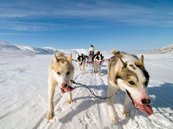 Dog Sled, Norway. Изображение № 12.