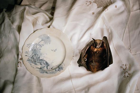Фотография Marian Drew. «Манипулированный» still life, освещенный узким источником света. В других фотографиях из этой серии использована световая кисть. Изображение № 26.