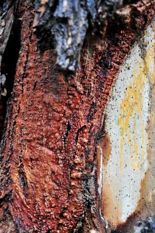 Treefilia. Изображение № 9.