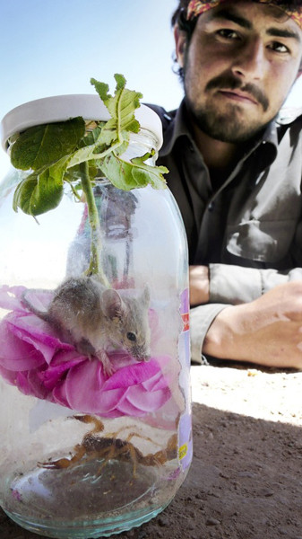 Afghan Catch 22.  На этом снимке четко выражен союз ANP и их британских «тренеров»: пойманные в банку мышь и скорпион. Таким образом показано равновесие между уважением и смертью – ни у кого нет безопасного выхода.. Изображение № 16.