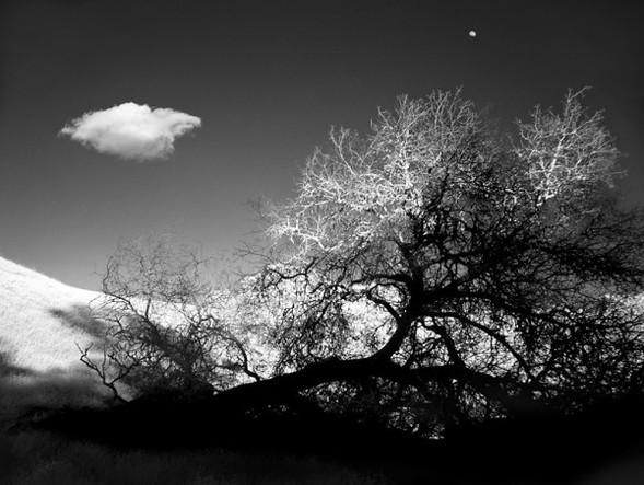 Фотограф Mitch Dobrowner. Изображение № 52.