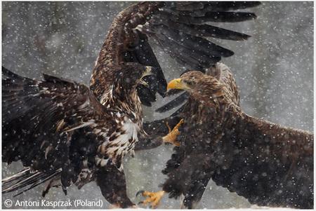 Победители Wildlife Photographer 2008. Изображение № 10.