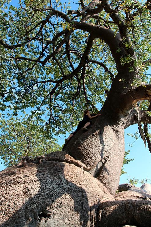 Остров баобабов в Ботсване. Изображение № 4.
