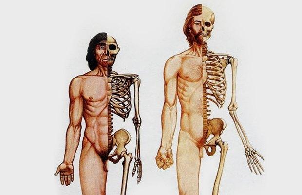 Я сочувствую неандертальцам. Изображение № 2.