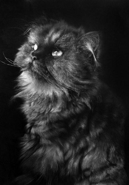 Кошки, люди, карандаш. Paul Lung. Изображение № 15.