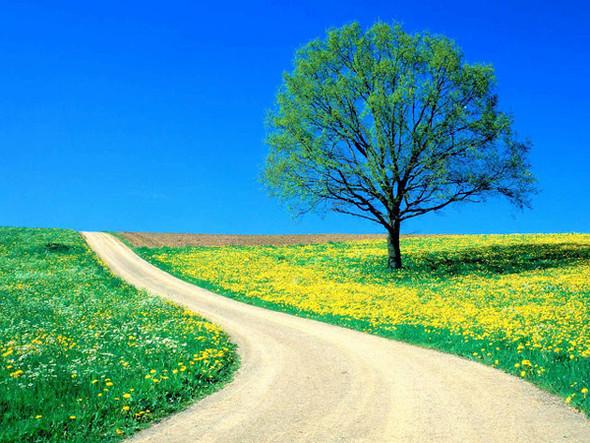 Весна идет! Создаем весеннее настроение. Изображение № 8.