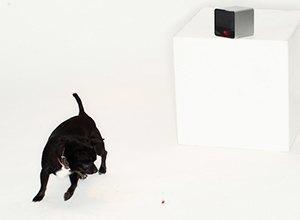 Как владелец шумной собаки придумал робота Petcube для питомцев. Изображение № 9.
