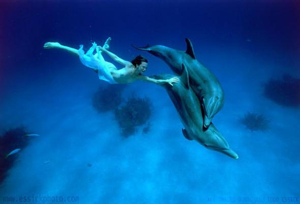 Todd Essick. Подводный мир. Изображение № 1.
