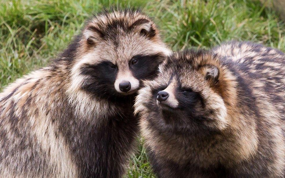 Эпоха истребления: 7 разновидностей животных, которых собрались уничтожить. Изображение № 4.