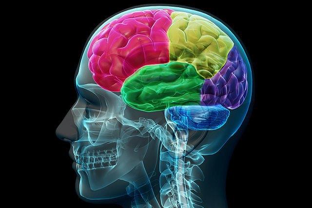 В Японии нашли простой способ оценки здоровья мозга. Изображение № 1.