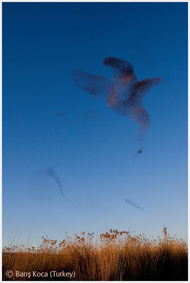 Победители Wildlife Photographer 2008. Изображение № 15.