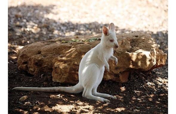 Животные-альбиносы. Изображение № 27.