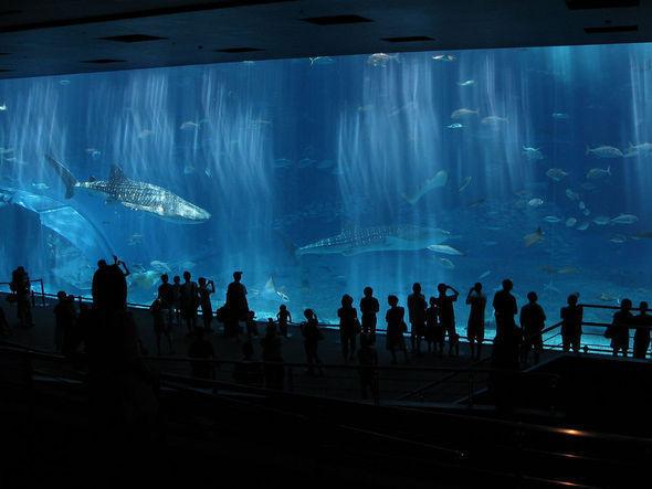 Изображение 1. Okinawa Churaumi Aquarium.. Изображение № 1.
