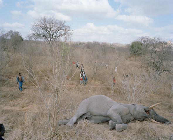 David Chancellor: охота на слона. Изображение № 2.