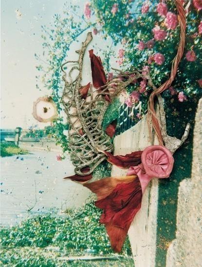 Фото-гербарий. Изображение № 9.
