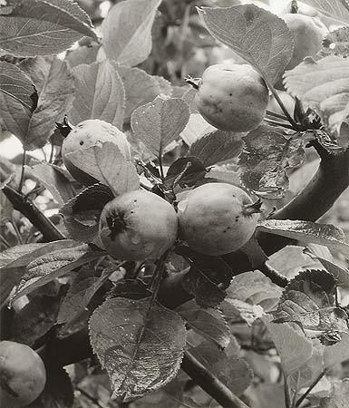 Элиот Портер: фотограф раскрасивший мир. Изображение № 26.