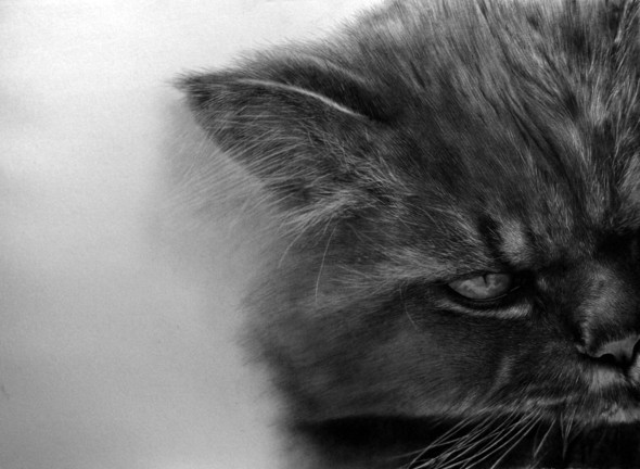 Кошки, люди, карандаш. Paul Lung. Изображение № 16.