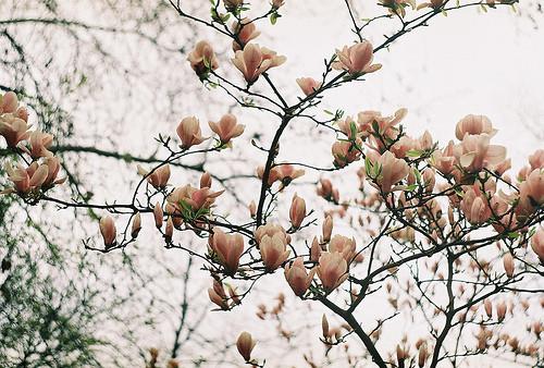 Изображение 10. Никогда не надо слушать, что говорят цветы. Надо просто смотреть на них и дышать их ароматом... Изображение № 10.