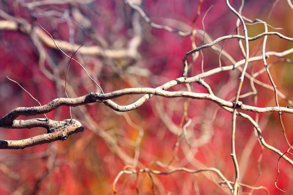 """""""Наступает"""". Фотограф Мария Гомолова. Изображение № 9."""