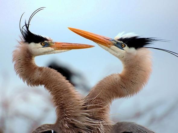 Лучшие новые снимки от National Geographic. Изображение № 33.