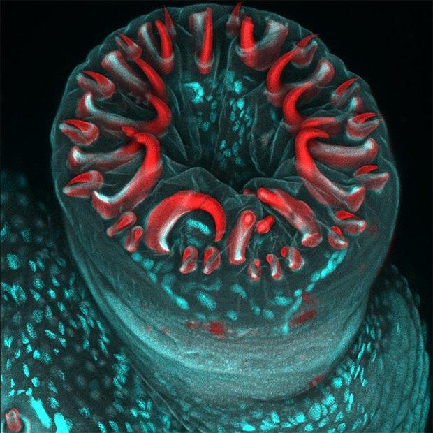 Что не видит глаз: Лучшие микроскопические фотографии этого года. Изображение № 4.
