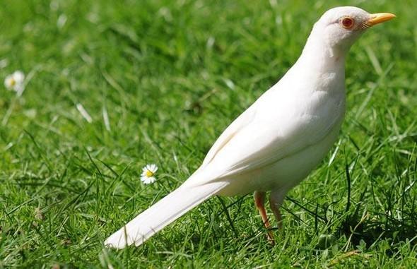 Животные-альбиносы. Изображение № 7.