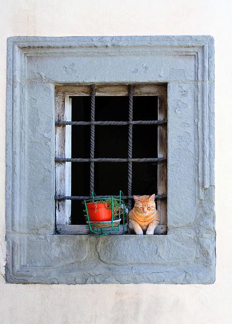 Cat. Window. Изображение № 15.